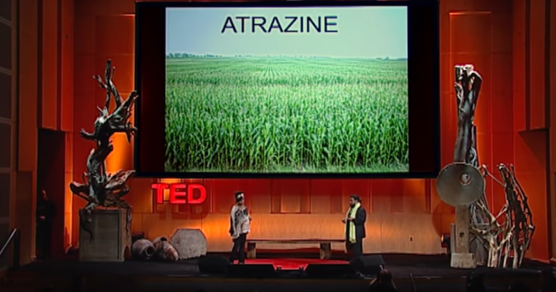 atrazine-ted-talks23456